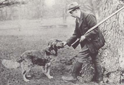 Culham Brass, a mixture of setter and water spaniel types.