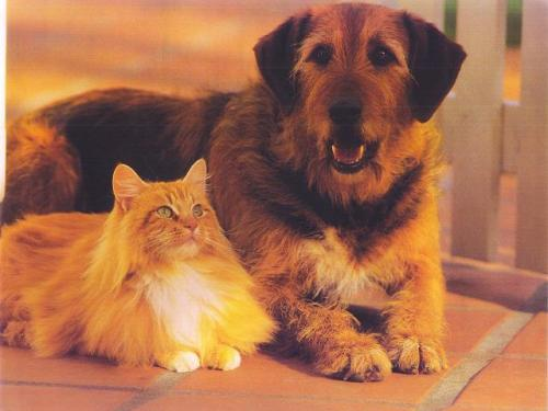 dog-and-cat1