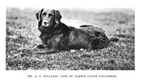 "Don of Gerwn was a liver flat-coat that won the International Retriever Trial, which was run by the Retriever Society (of Great Britain). His sire was a Tweedmouth dog named Lucifer, a ""cream-colored"" dog. His dam was a ""Rust,"" another reddish liver dog."