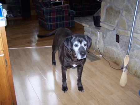 steve irwin dog