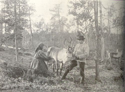 Entirely unrelated. Kven people milking reindeer in Western Finnmark in Norway.