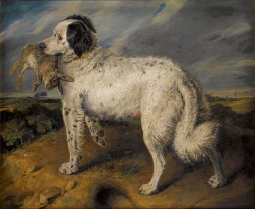 Venus the Landseer Newfoundland