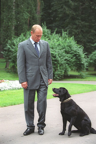 Vladimir and Koni