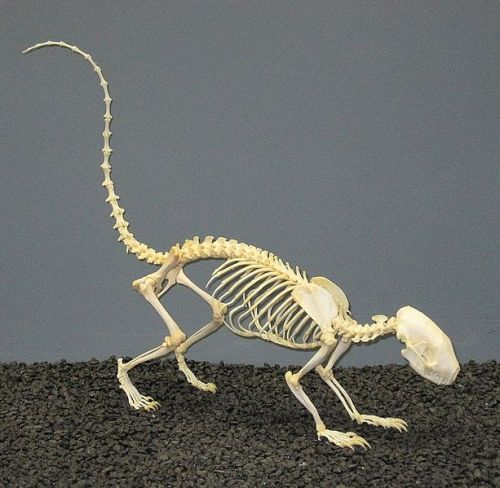 The answer to the skeleton question   Natural History
