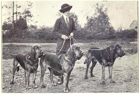 Πώς προήλθε η ονομασία του Bloodhound;