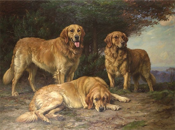 dogs similar to golden retriever russian yellow retriever natural history 7824
