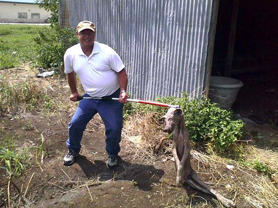 chupacabras | Natural History Raccoon With Mange