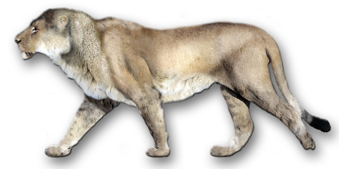 What was the American lion? « Retrieverman's Weblog