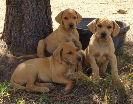 Black Cur Related Keywords & Suggestions - Black Cur Long Tail ...