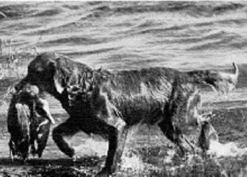 Dog Kennels Woodend