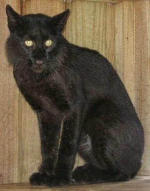 Found Black Anf White Cat Pa