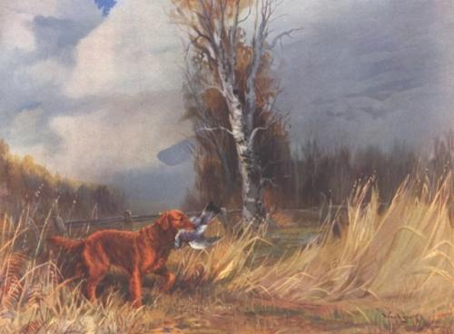 field-line golden retriever | The Retriever, Dog, & Wildlife Blog