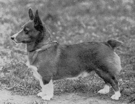 Natural Bobtail Dog Breeds