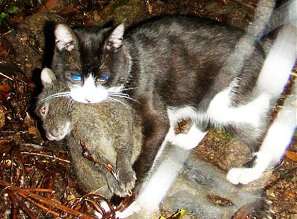 feral cats Find out about feral animals including cane toads, european wild rabbits, feral camels, feral cats, feral deer, feral goats , feral horses, feral pigs and feral water.