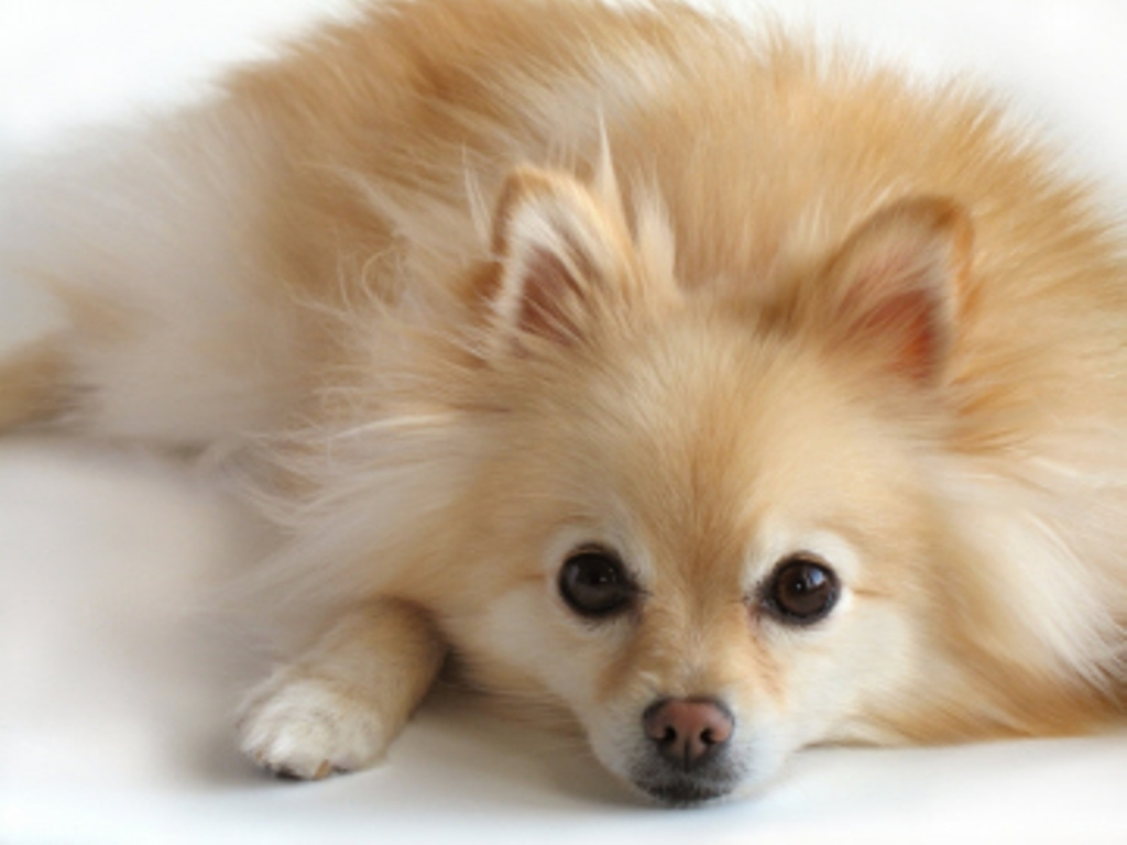 Names Of Small Dog Breeds