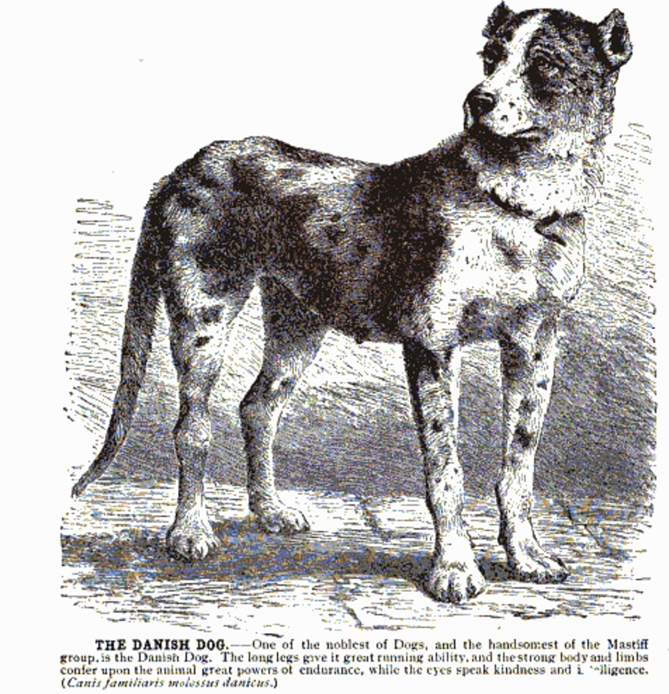 history of dogs A history of how dogs evolved from wolves by: tippy and turbo the scientific family that the domestic dog is a part of, (canidae family of the order carnivora), has several other.