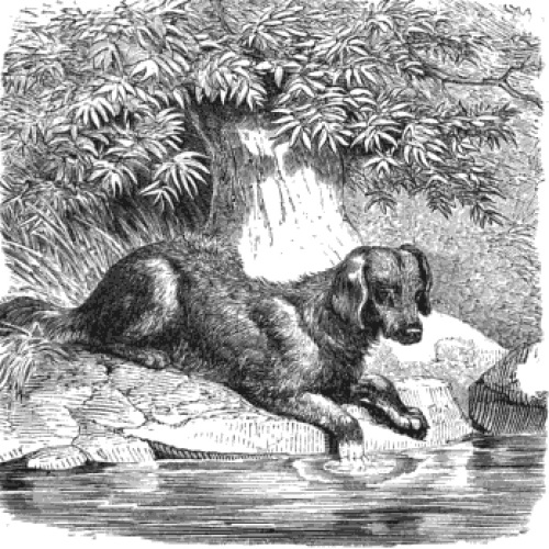 St john s water dog natural history page 4 for Water dogs fish