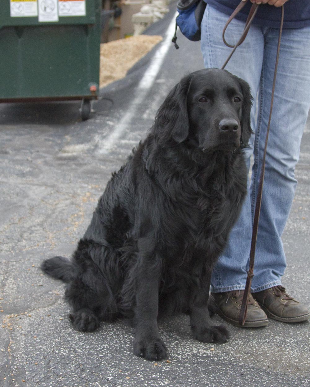 Dog Breeds With Wavy Hair On Back