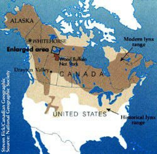 The historic range of the Canada lynx | Natural History on canada lynx diet, canada goose range map, canada lynx habitat, canada lynx classification, canada lynx home, canada lynx face, canada lynx life cycle, canada lynx den, lynx habitat map, canada lynx diagram, canada lynx predators, canada lynx behavior, canada lynx sightings in 2014, eurasian lynx range map, lynx territory map, canadian lynx map, canada lynx endangered, canada lynx size, canada lynx cat, canada lynx population numbers,