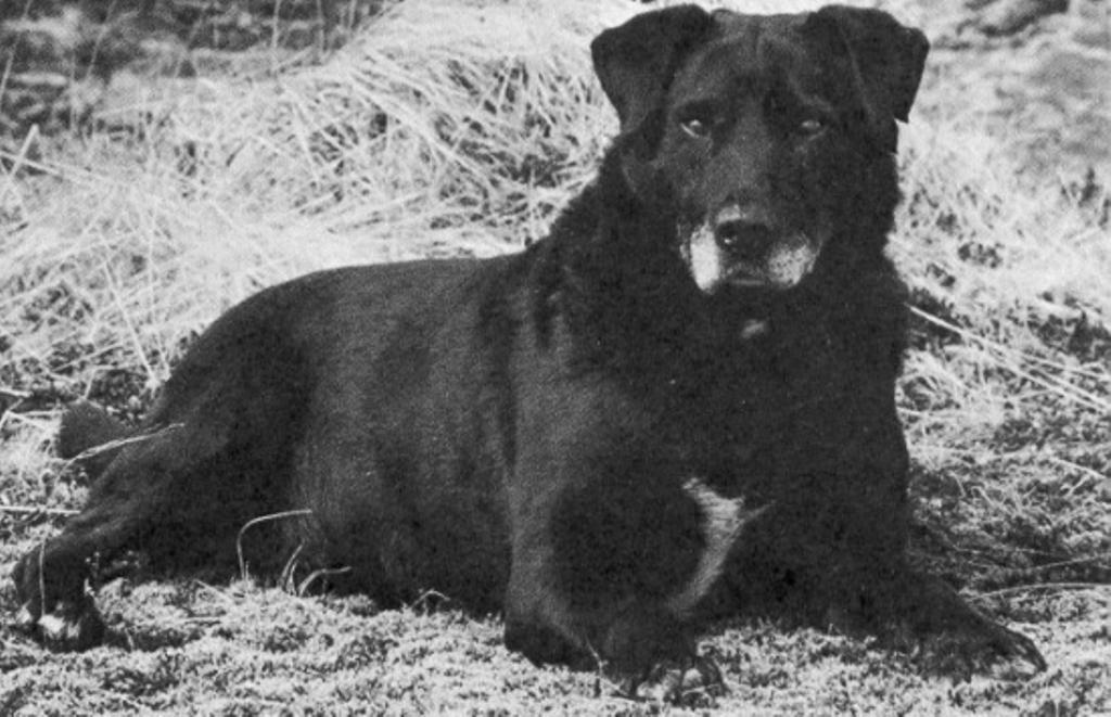 Dog Trainer St John S Newfoundland