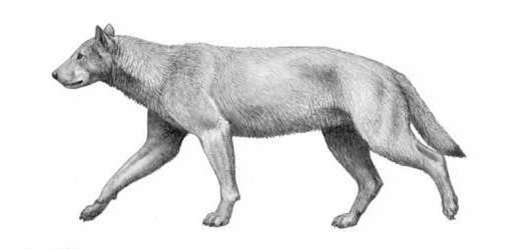 Aelurodon ferox | Natural History