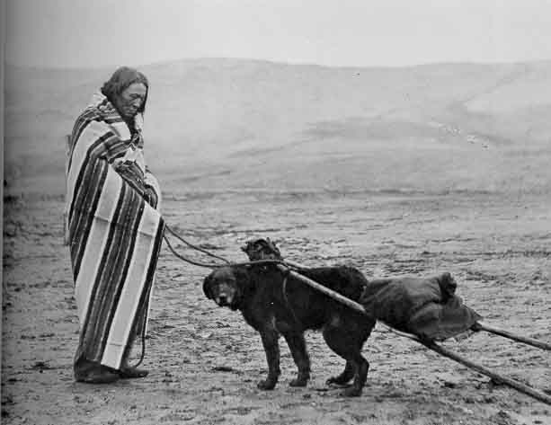 travois-dog-newfounland-ancestry.jpg