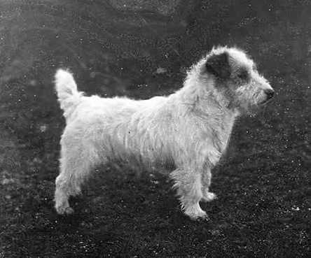 What Did The First Dog Look Like