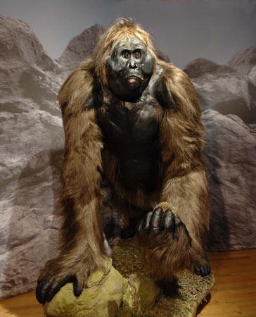Gigantopithecus Gigantopithecus blackii