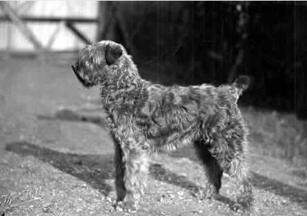 National Dog Day Ireland