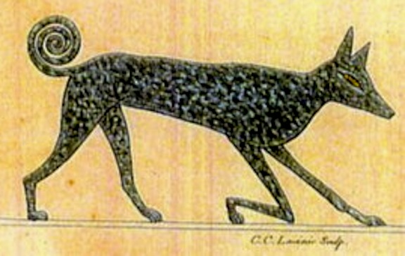 What Dog Breed Did The Egyptians Have