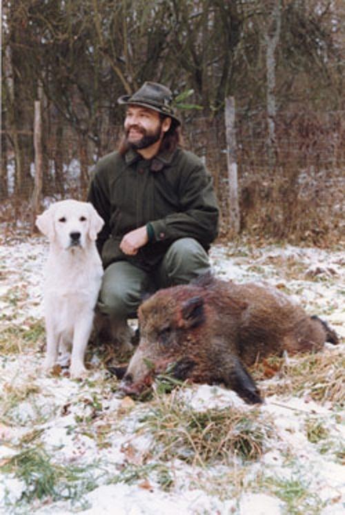 wild boar | Natural History
