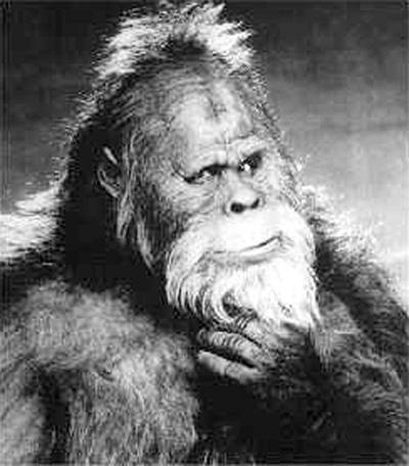 Bigfoot is real… and a hybrid human species! | Natural History