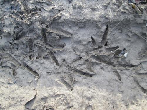 dinosaur tracks 2