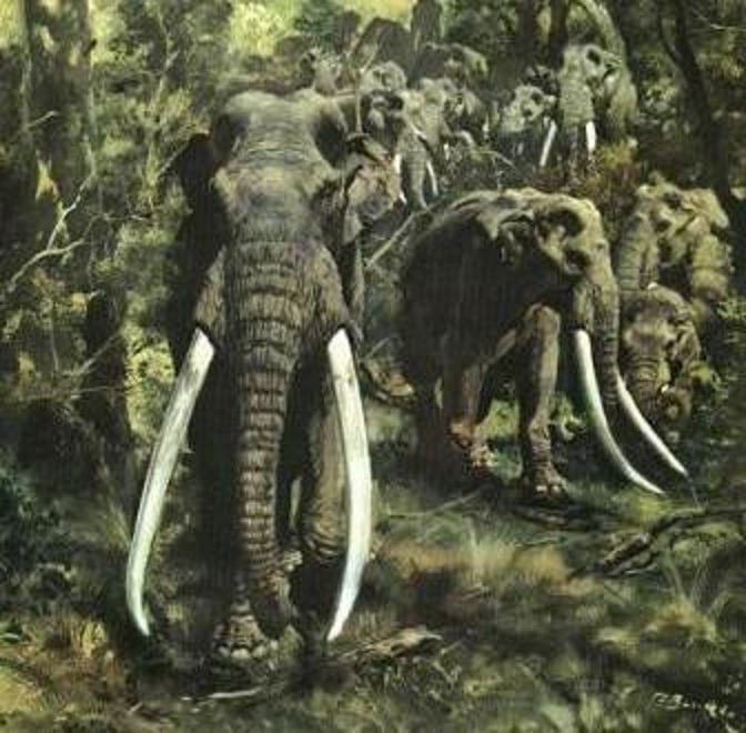 Could the extinct elephants of North China that lived as recently as 3,000 years ago be a relict species of straight-tusked elephant?