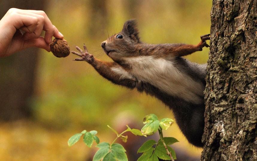 thank-you-squirrel.jpg