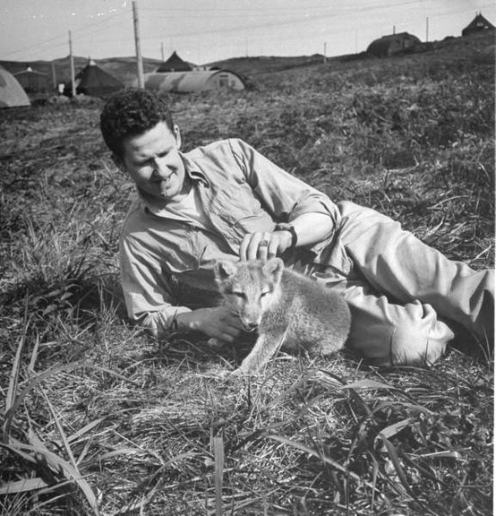 american soldier with pet arctic fox 1943