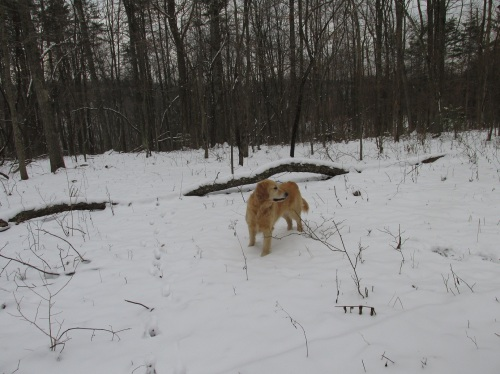 Miley in the Snowy Forest once again