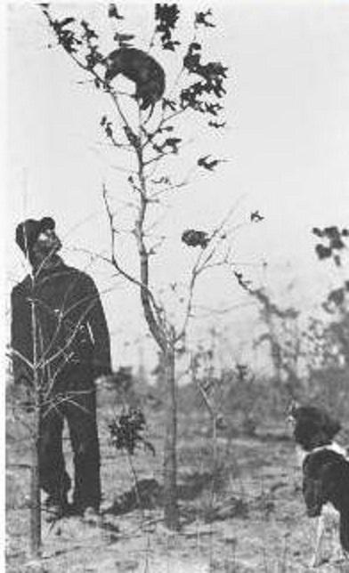 opossum treed 1917