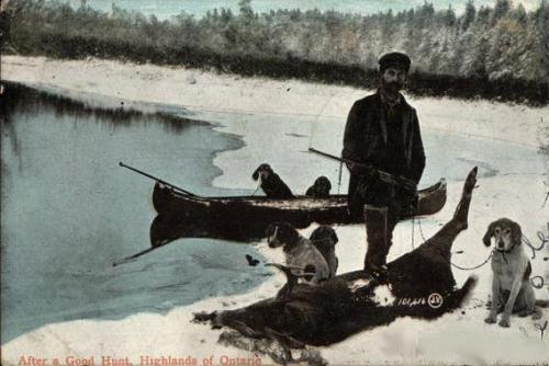 ontario deer dogs 1907