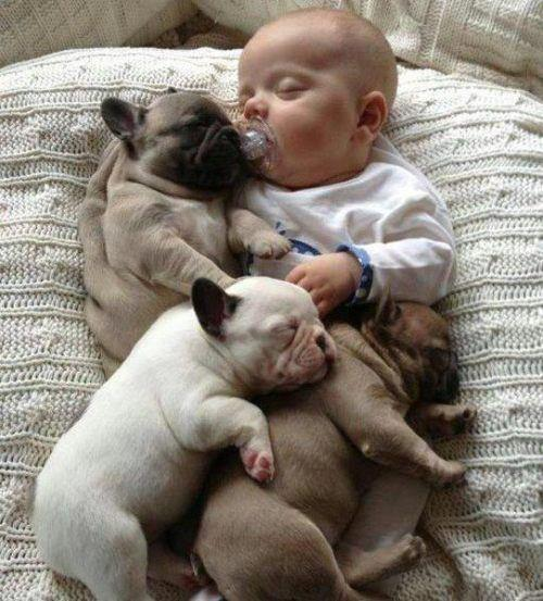 bulldogs and baby
