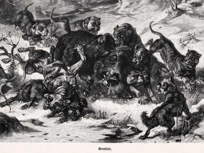 Bullenbeisser Natural History