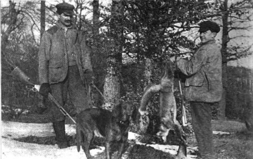 michigan foxhound 1908