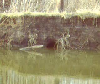 beaver bank den