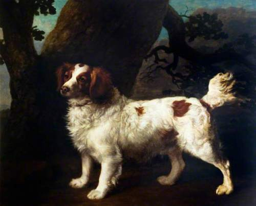 George stubbs red and white spaniel