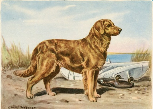Golden Retriever Edwin Megargee 1942