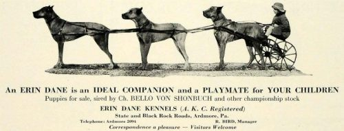 Photo courtesy of Nara U.  From a 1933 kennel advertisement.