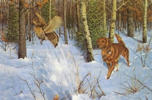 Startled Grouse-Golden retriever Owen Gromme
