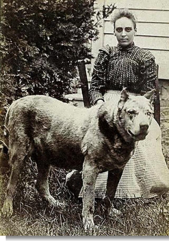 """Photo of a rare West Virginia """"devil dog,"""" circa 1930 ..."""
