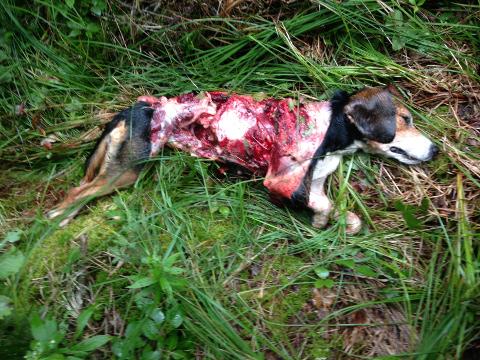 Hunting Dog Training Mississippi
