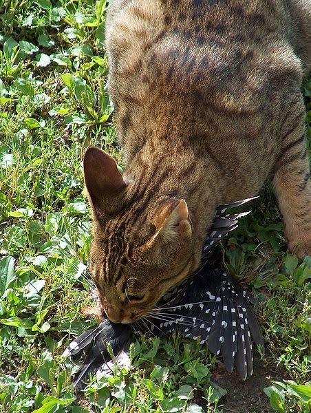 Stray Cat Died In My Yard Australia